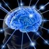 Pranë krijimit të trurit artificial ndodhen shkencëtarët