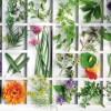 Θεραπευτικά βότανα για διάφορες ασθένειες