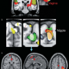 Οι θηλές διεγείρουν τον εγκέφαλο όπως και τα γεννητικά όργανα