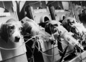History of animal experimentation