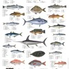 List of common fish names